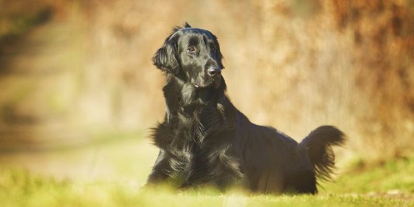 The Most Underrated Dog Breeds