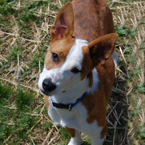 Sassy/Terrier Mix/Female/Adult