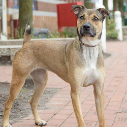 Adopt a dog:Coco/Mixed Breed/Female/Adult,