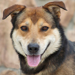 Axel von Apolda/German Shepherd Dog Mix/Male/Adult