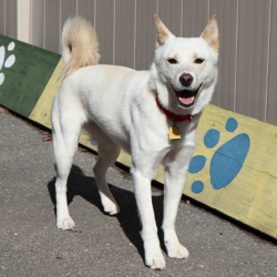Adopt a dog:Radar/Mixed Breed/Female/Young,