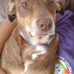 Adopt a dog:Barbie Girl/Shepherd/Female/Young,Ms. Barbie Girl is a dog like no other. I wish I could convey with words how special she is, so I will try. She is a hilarious dog, if you give her 2 inches of space on the couch next to you, she will make it work,