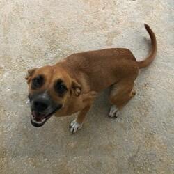 Adopt a dog:Sirena/Affenpinscher/Female/Adult,