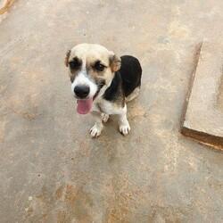 Adopt a dog:Lokey/Affenpinscher/Male/Adult,